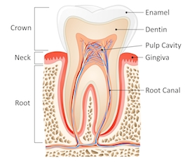 Root Canal Montrose | Dentist Montrose CO